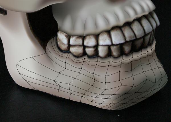 skull_8-6_lower_jaw