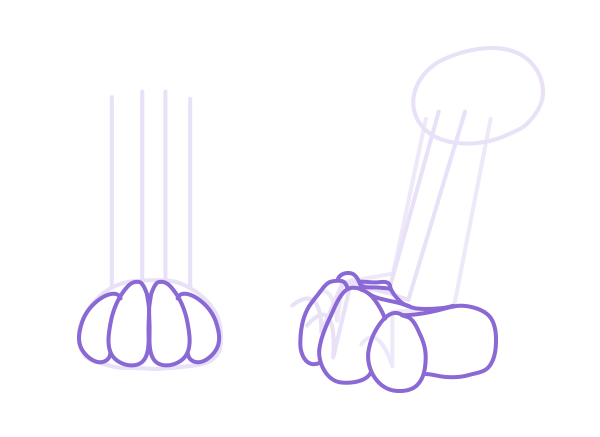 catdrawing_3-5_paws_draw_scheme_pads