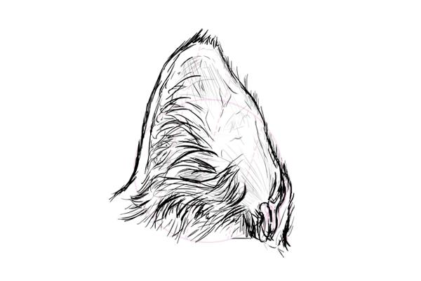 catdrawing_7-5_ear_sketch