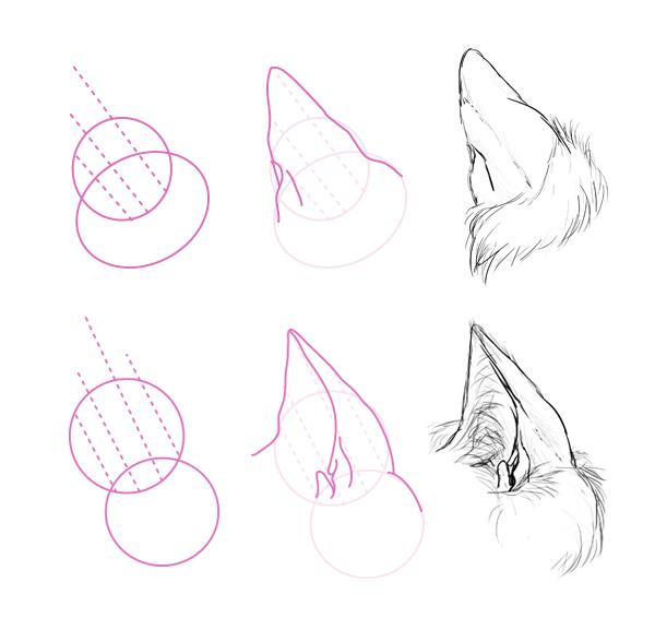 catdrawing_7-6_ears_back_side