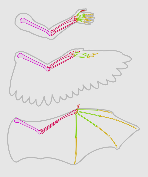 wings_1-1_wing_anatomy