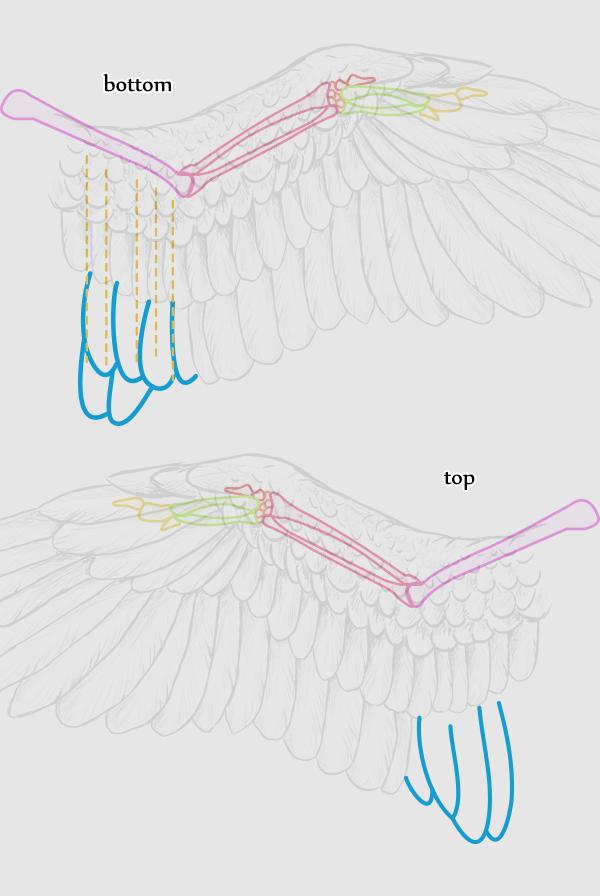 wings_2-13_birdwing_tertials