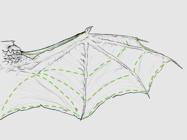 wings_3-5_dragonwing_membrane