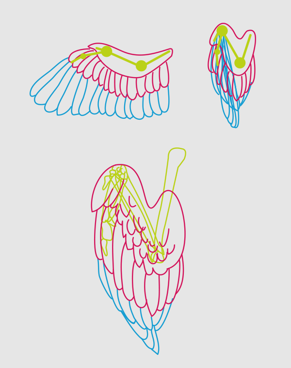wings_5-3_birdwing_folded