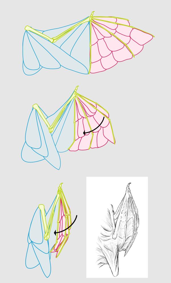 wings_5-4_batwing_folded