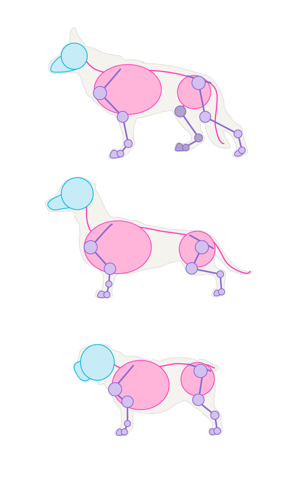 drawingdogs_1-3_breeds_differences