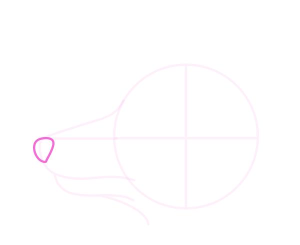 drawingdogs_4-10_head_profile