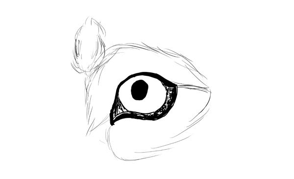 drawingdogs_5-5_eye