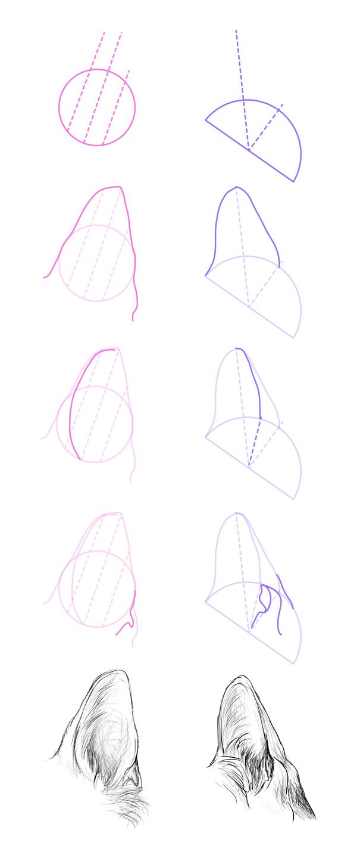 drawingdogs_7-1_ears_pointed