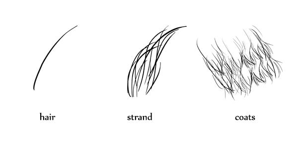 drawingfur_1-2_fur_anatomy
