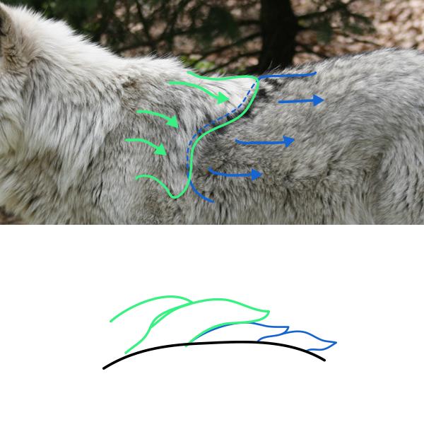 drawingfur_2-3_fur_overlapping