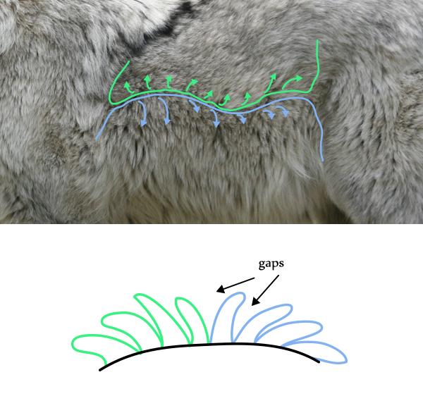 drawingfur_2-4_fur_breaking
