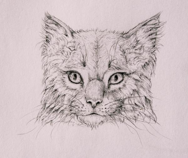 drawingfur_4-17_head_coats
