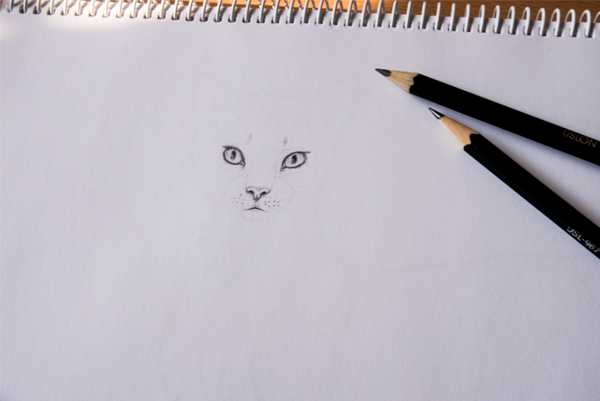 drawingfur_4-4_face