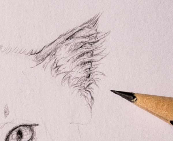 drawingfur_4-9_head_ears