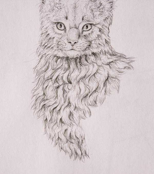 drawingfur_5-5_chest_coats