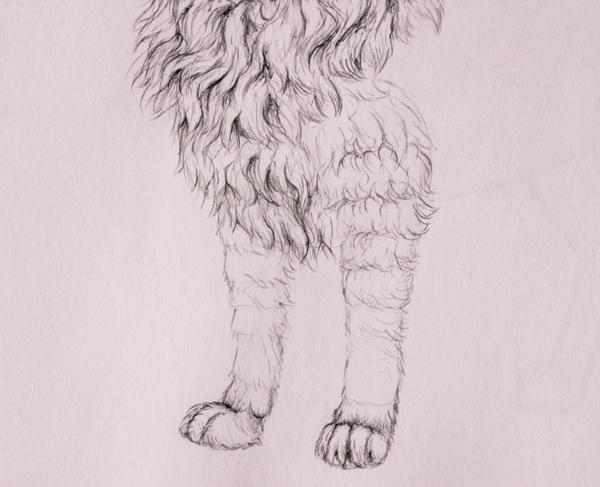 drawingfur_6-3_forelegs
