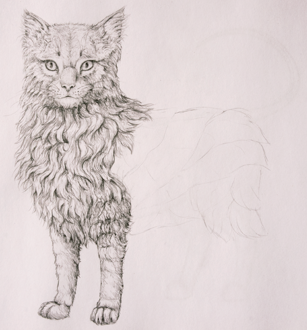 drawingfur_7-1_barrow