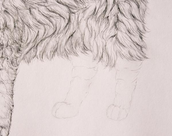 drawingfur_8-1_hind_legs