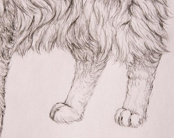 drawingfur_8-2_hind_paws