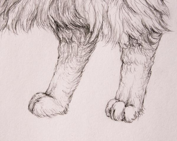 drawingfur_8-3_hind_paws