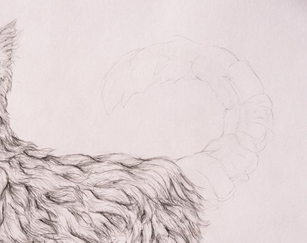 drawingfur_9-1_tail