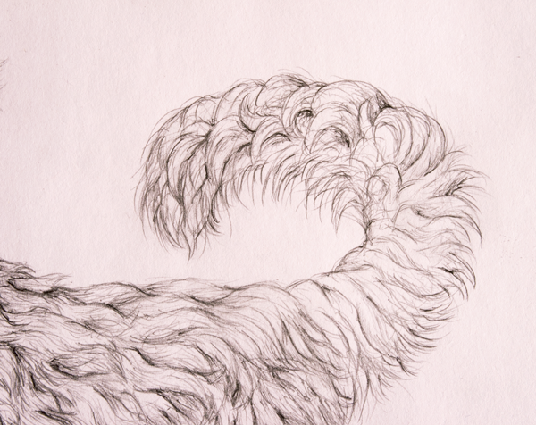 drawingfur_9-3_tail