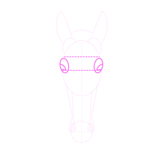 drawinghorse_5-11_head_front
