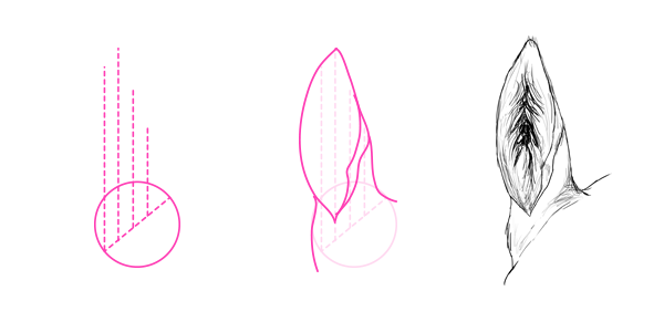 drawinghorse_7-1_ears_front