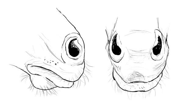 drawinghorse_8-2_lips