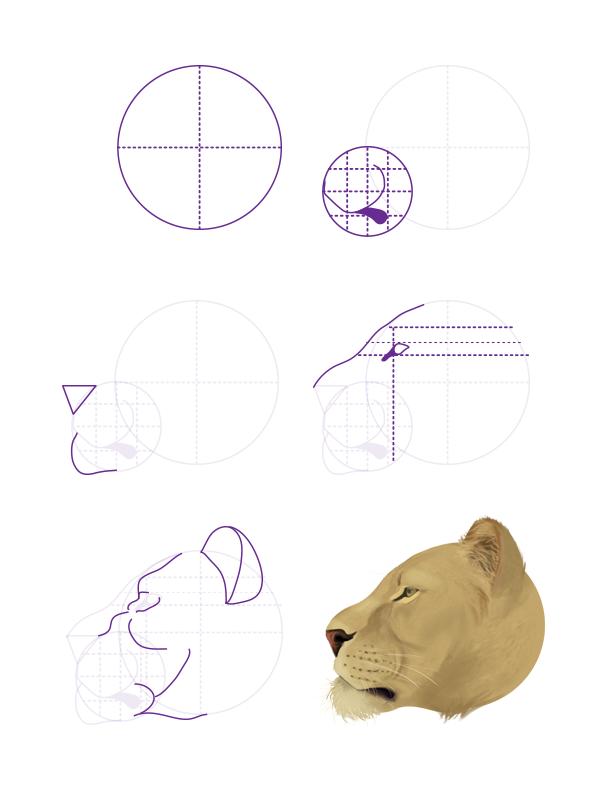 drawingbigcats_2-6_lion_head_profile