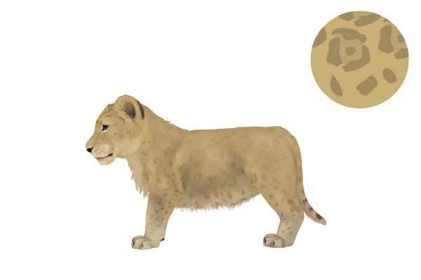 drawingbigcats_2-9_lion_cub