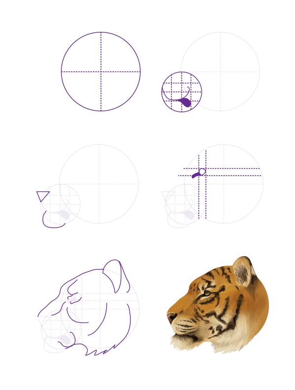 drawingbigcats_3-6_tiger_head_profile