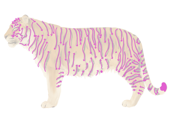 drawingbigcats_3-8_siberian_tiger_stripes