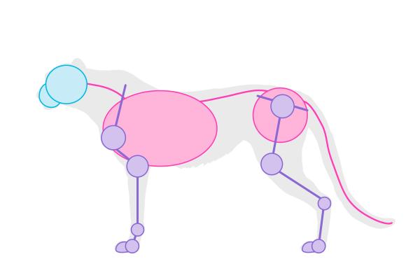 drawingbigcats_4-2_cheetah_simplified