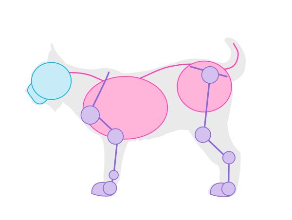drawingbigcats_4-2_lynx_simplified
