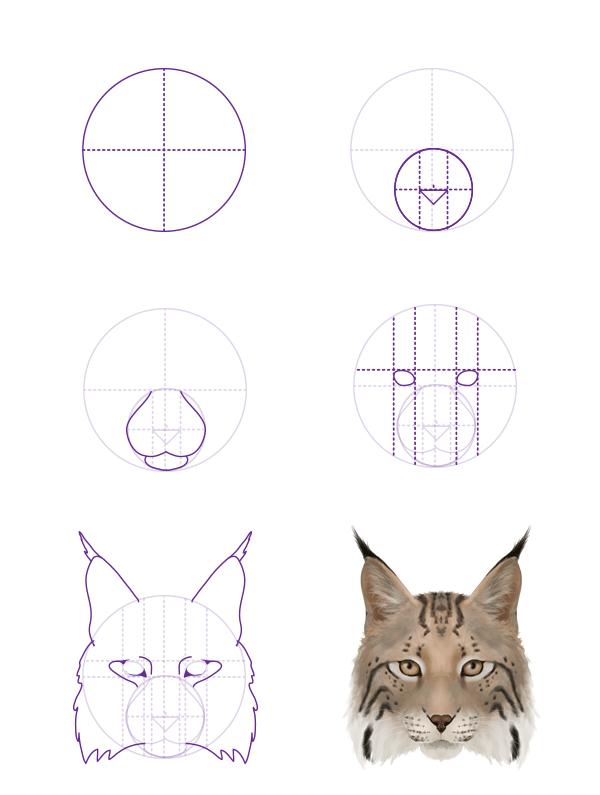 drawingbigcats_4-5_lynx_head_front