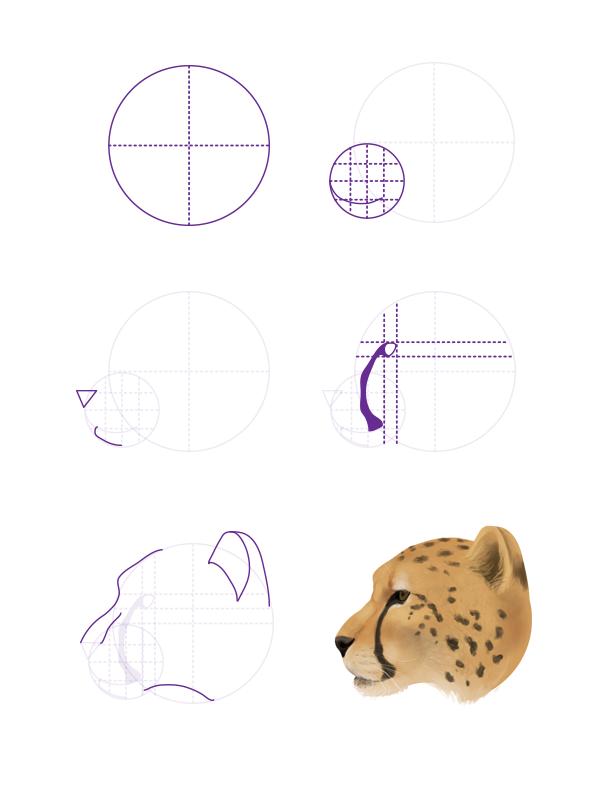 drawingbigcats_4-6_cheetah_head_profile
