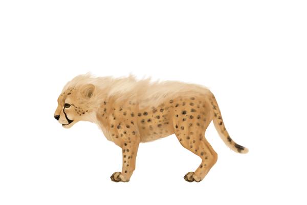drawingbigcats_4-8_cheetah_cub
