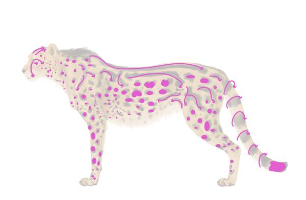 drawingbigcats_4-9_king_cheetah_spots