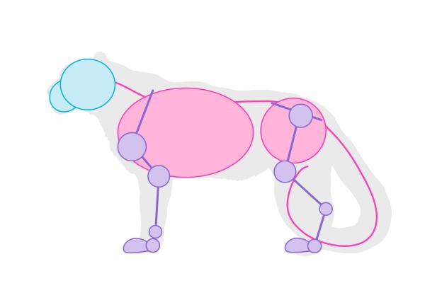 drawingbigcats_5-2_snow_leopard_simplified