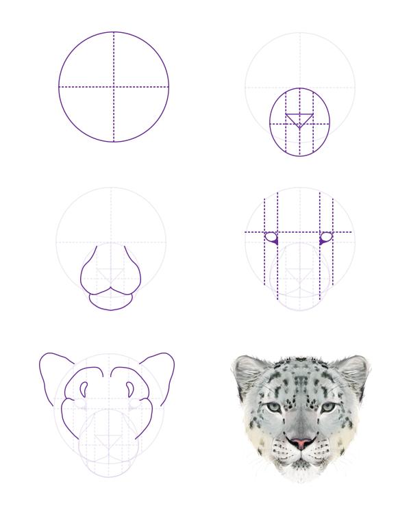drawingbigcats_5-5_snow_leopard_head_front