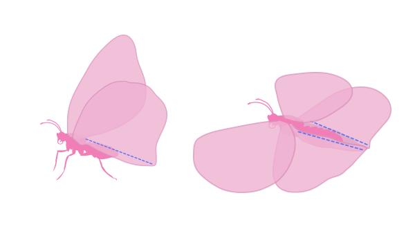 drawingbutterfly_2-2_wings_bending