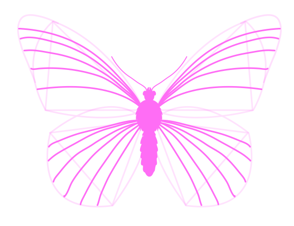 drawingbutterfly_3-4_wing_drawing