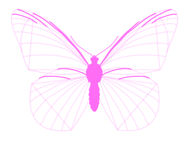 drawingbutterfly_3-5_wing_drawing