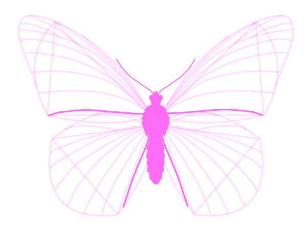 drawingbutterfly_3-6_wing_drawing