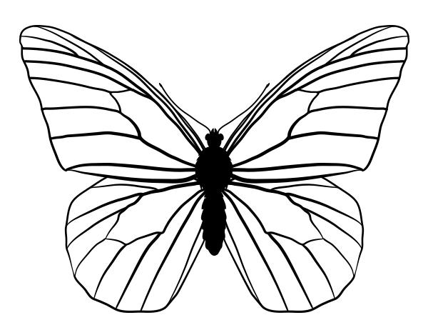 drawingbutterfly_4-1_monarch
