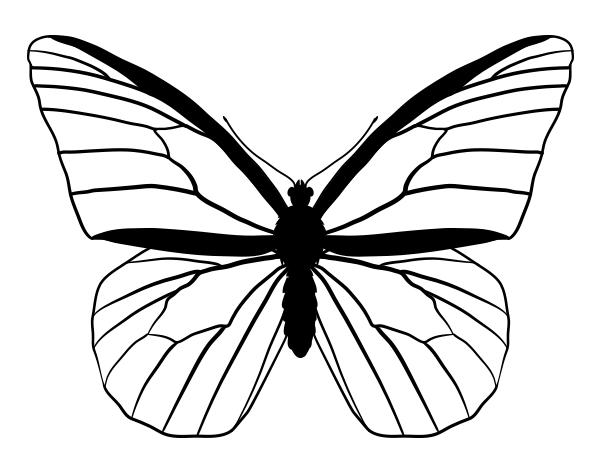 drawingbutterfly_4-2_monarch
