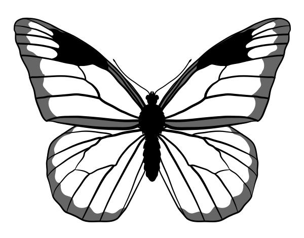 drawingbutterfly_4-4_monarch