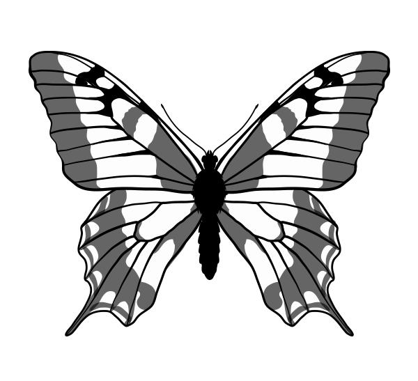 drawingbutterfly_6-4_swallowtail